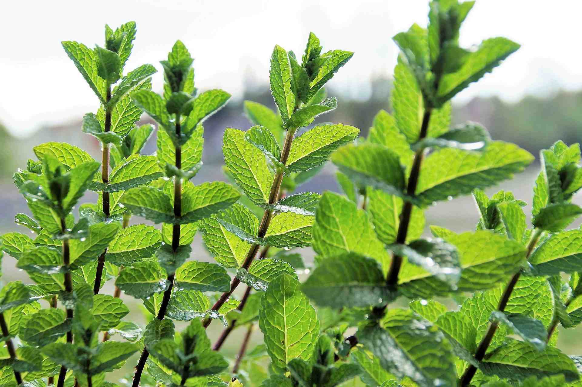 Comment conserver les feuilles vertes ?