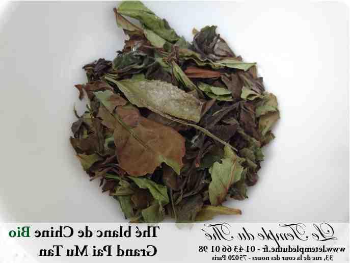Comment est fait le thé blanc ?
