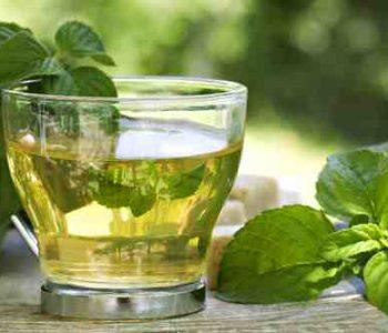 Quelle est la meilleure menthe pour le thé ?